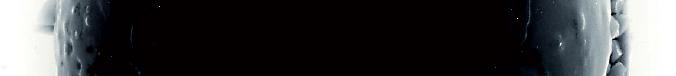 die-137-schwarze-torten